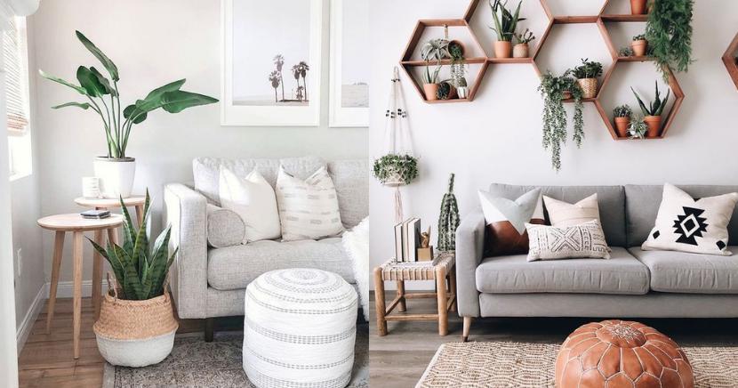 Tips para decorar tu espacio interior con plantas