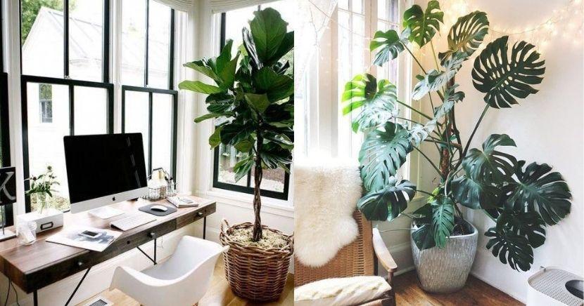Ideas para decorar tu depa con tantas plantas como desees