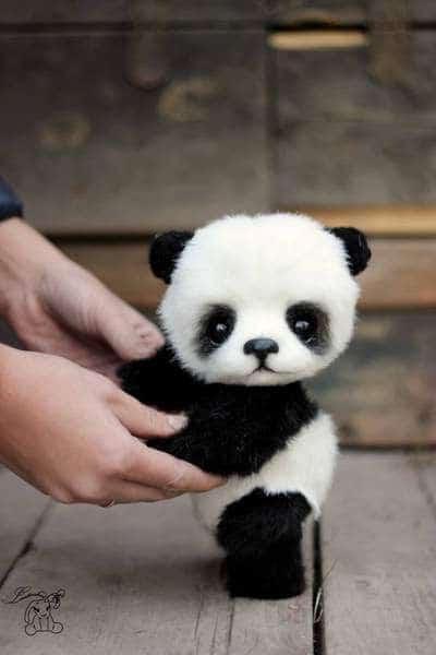 14 Animalitos tiernos por si estás teniendo un mal día - panda bebé
