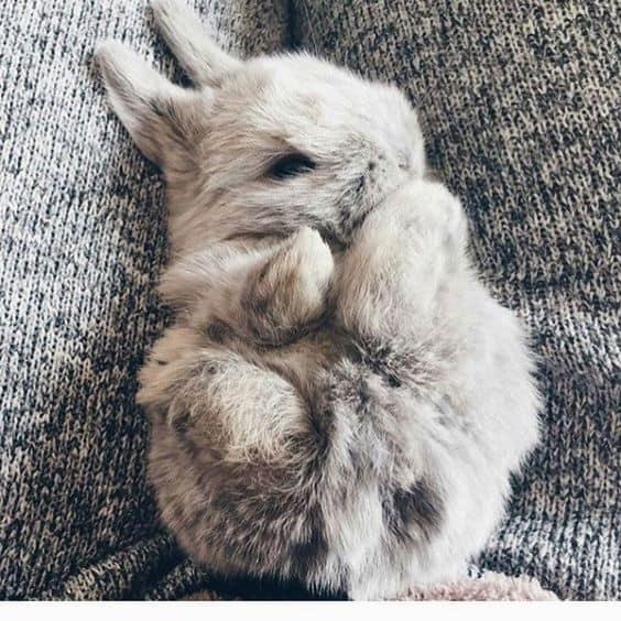 14 Animalitos tiernos por si estás teniendo un mal día - conejo bebé