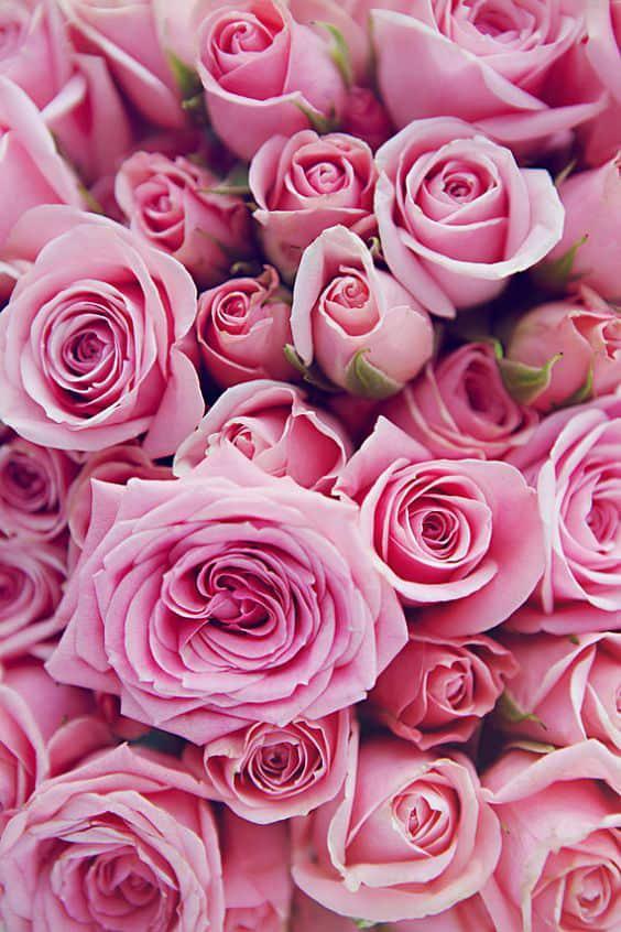 Remedios caseros para los labios partidos - Leche de Rosas