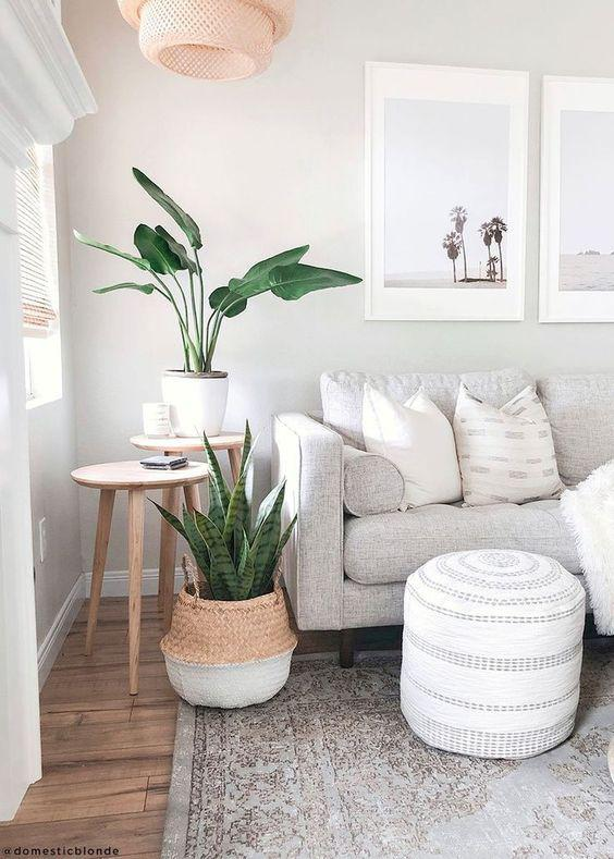 Tips para decorar tu espacio interior con plantas - Ve a un vivero