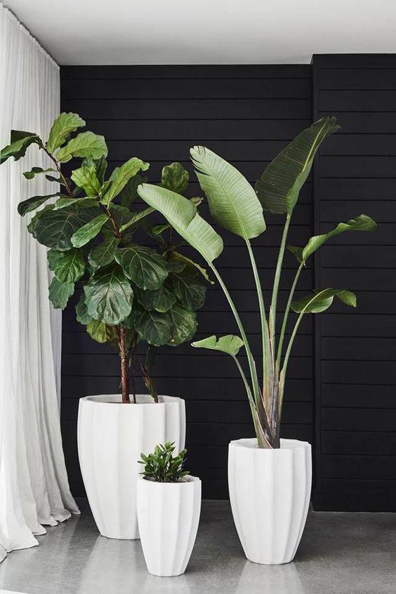 Tips para decorar tu espacio interior con plantas - Hojas grandes para las esquinas