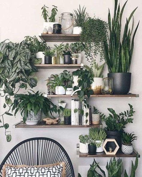 regalos para el 14 de febrero - plantas