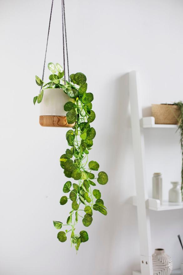 Ideas para decorar tu depa con tantas plantas como desees - Una planta colgante
