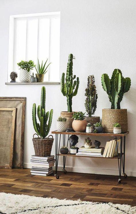 Ideas para decorar tu depa con tantas plantas como desees - Crea tu propio oasis