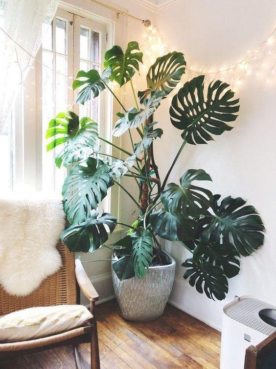 Ideas para decorar tu depa con tantas plantas como desees - Una pieza grande