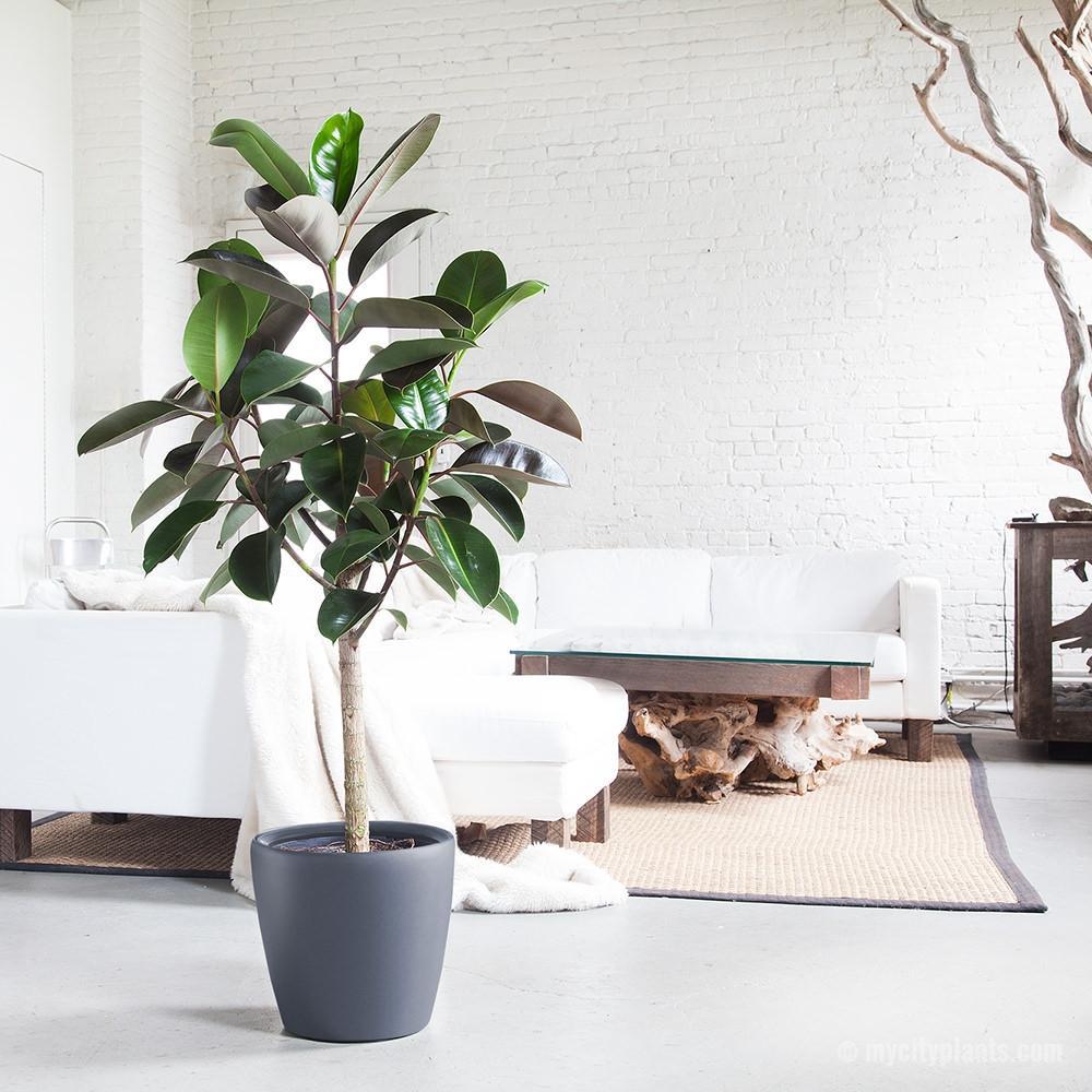 Ideas para decorar tu depa con tantas plantas como desees - Una pieza es suficiente