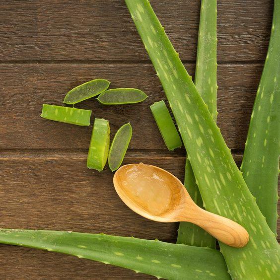Los mejores remedios naturales para eliminar las ojeras - Aloe vera
