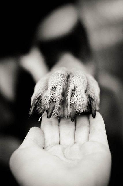 Ideas para tomarte fotos con tu perrito - Juntos por siempre