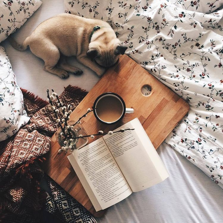 Ideas para tomarte fotos con tu perrito - Lectura del día